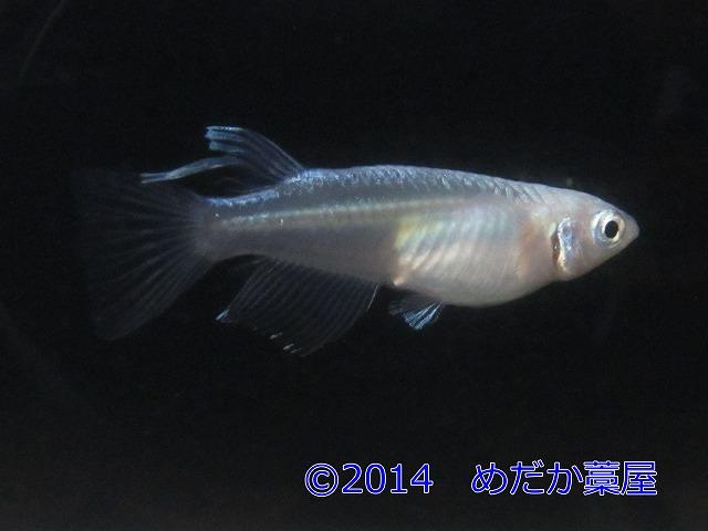 s-IMG_1550-1